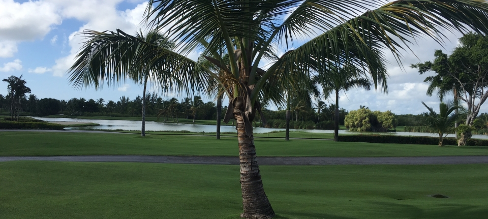 Golf The Lakes, vue du fairway du 1